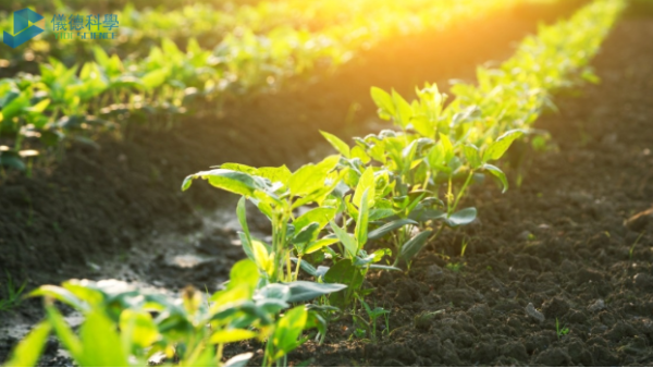 手持式RoHS测试仪在土壤重金属污染及修复的检测应用