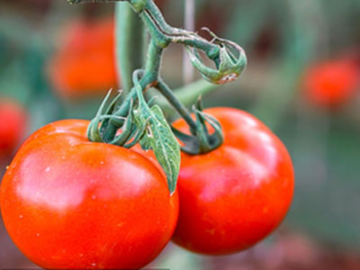 农业食品检验